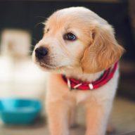 Dog Culture - správna starostlivosť o psa