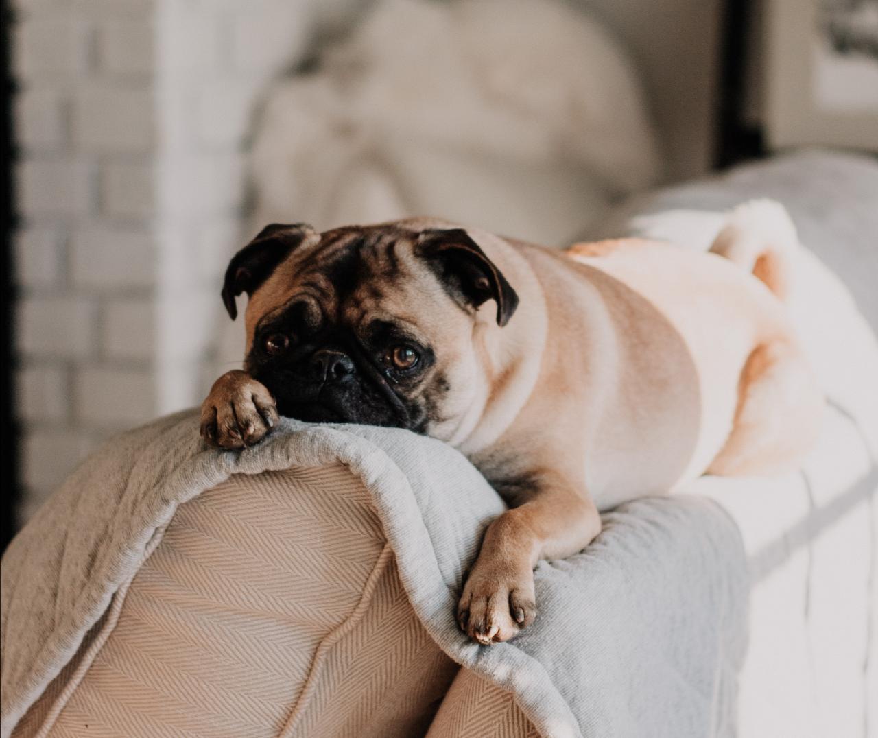 spickova starostlivost a strihanie psa